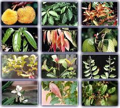 Sathuragiri Rare Herbs