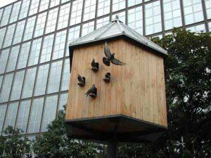 birds in house