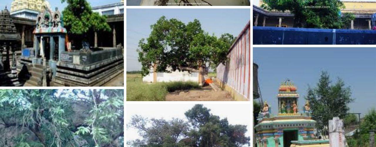 Temple trees
