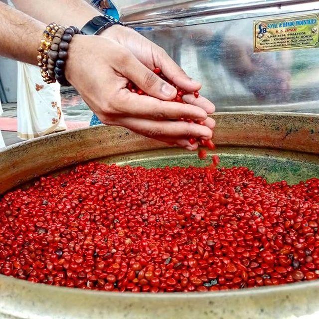 Guruvayur Temple red seeds